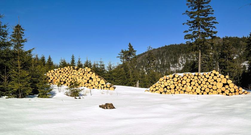Gospodarka, Zabezpieczenie zapłaty surowiec drzewny może poręczone - zdjęcie, fotografia