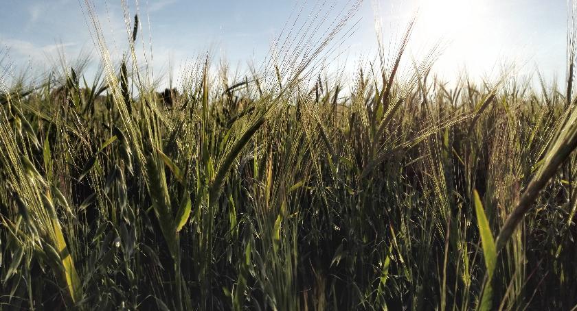 Wiadomości, Panuje susza Premier powinien ogłosić klęski żywiołowej - zdjęcie, fotografia