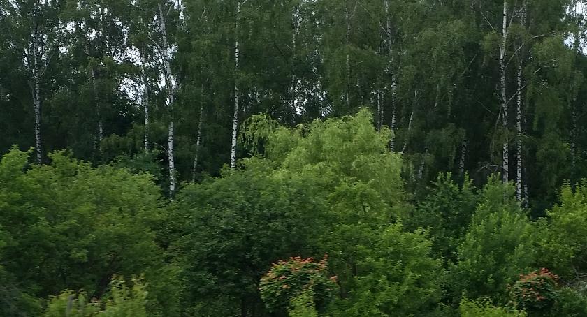 Styl życia, lesie najprzyjemniej chodzi latem - zdjęcie, fotografia