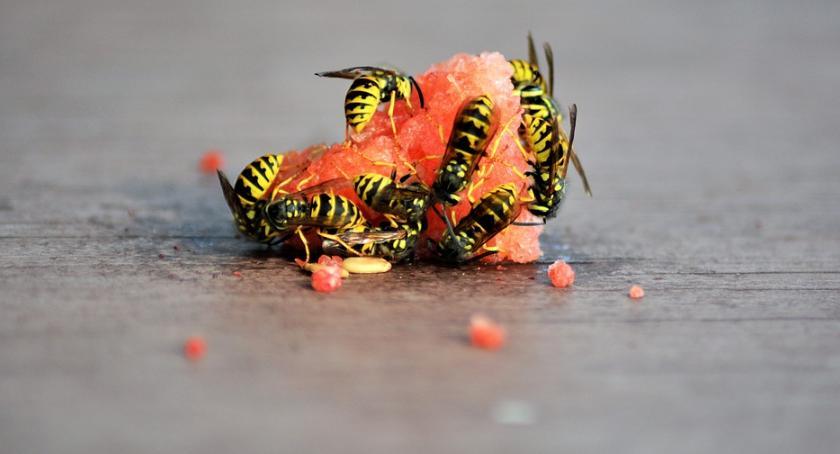 Styl życia, Żądlące owady groźne zdrowia życia - zdjęcie, fotografia
