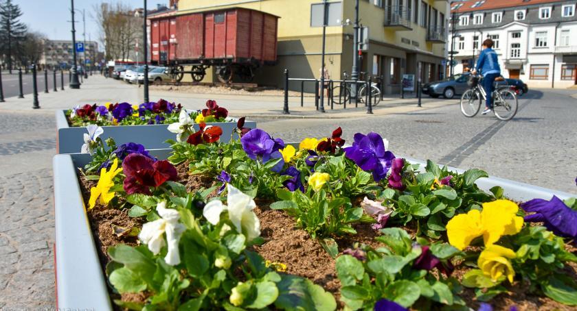 Wiadomości, Łąki pełne kwiatów zamiast trawników - zdjęcie, fotografia