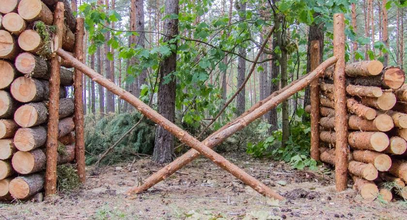 Blogi, Lecą Wióry zarabia sąsiad potrzebne - zdjęcie, fotografia