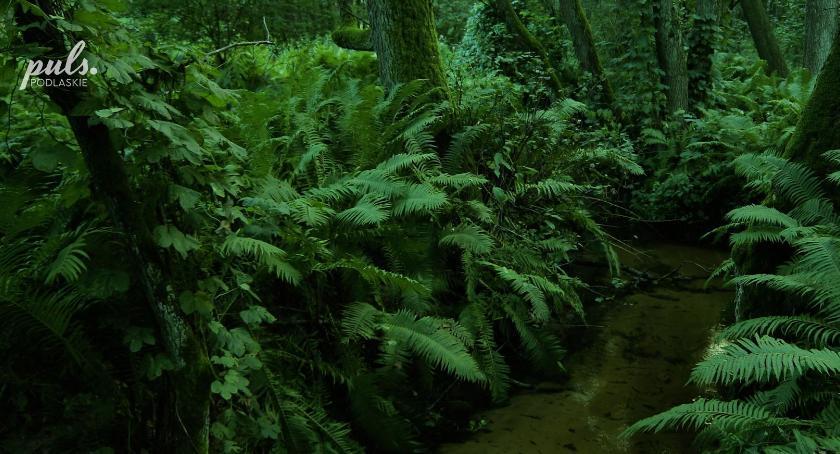 Styl życia, Akumulatory jesienią można sobie naładować oglądając zdjęcia Podlasia - zdjęcie, fotografia