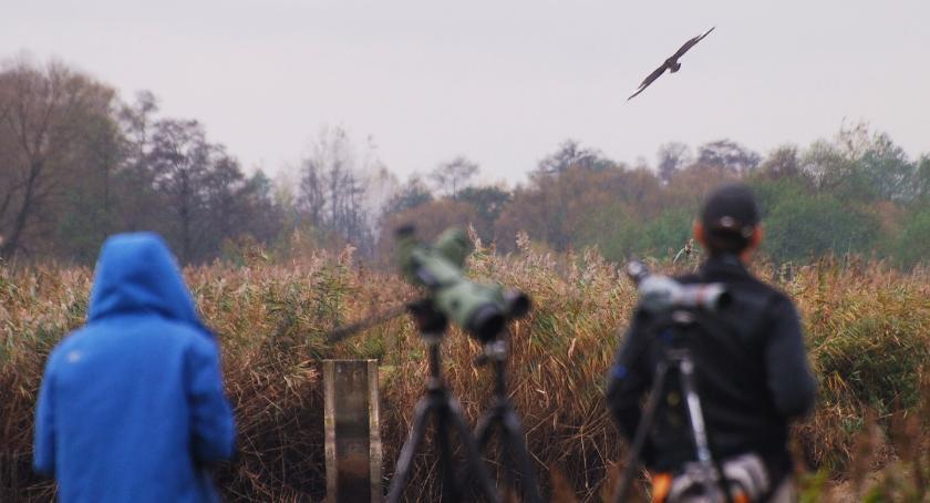 Wiadomości, Podlasiu może kwitnąć turystyka ornitologiczna - zdjęcie, fotografia