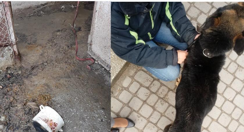 Wiadomości, Krzysztof areszcie Zarzut znęcanie zwierzęciem - zdjęcie, fotografia