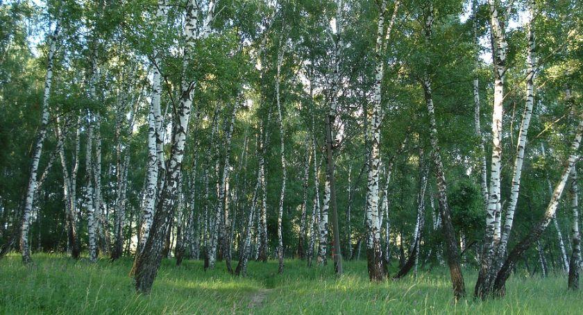 Wiadomości, Posadzą drzew Suwałkach - zdjęcie, fotografia