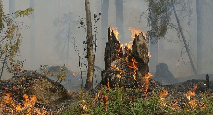 Wiadomości, Podlasiu potrzebny deszcz Zagrożeniem lasów tylko pożary - zdjęcie, fotografia