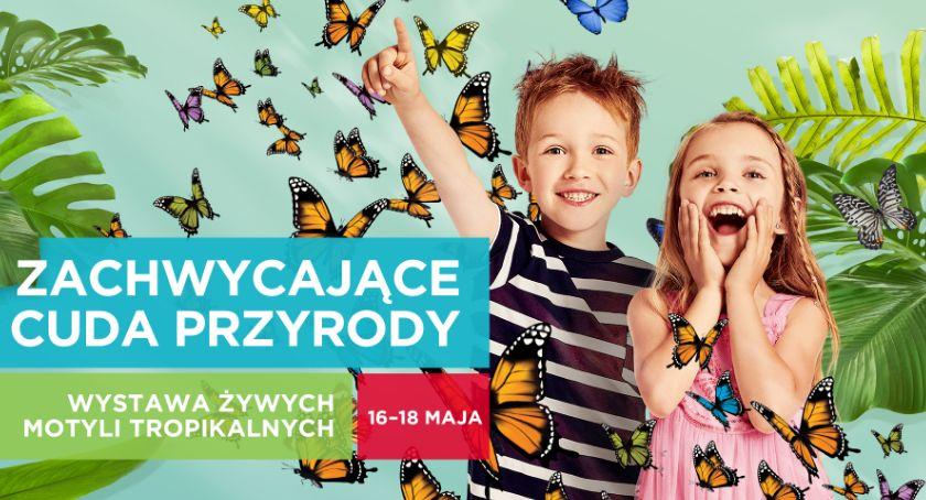 Wiadomości, Galeria Atrium Biała zaprasza oglądania motyli - zdjęcie, fotografia