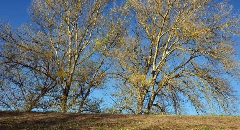 Wiadomości, Urodziło dziecko Posadź drzewo! akcja Lasów Państwowych - zdjęcie, fotografia