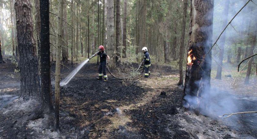Wiadomości, Spłonęło półtora hektara Nadleśnictwie Browsk - zdjęcie, fotografia