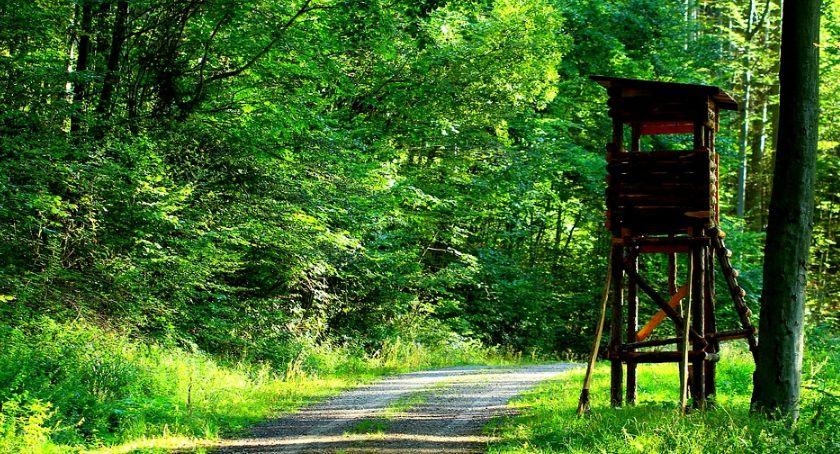 Blogi, Lecą Wióry lesie - zdjęcie, fotografia