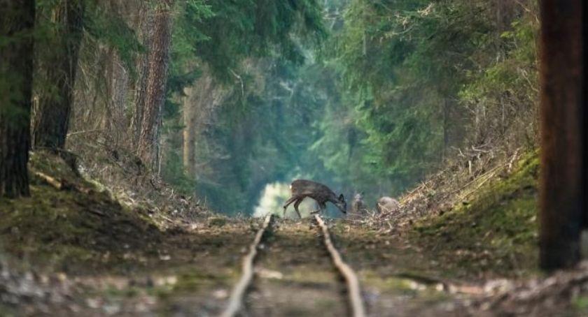 Wiadomości, Obliczono ryzyko kolizji pociągu zwierzętami leśnymi - zdjęcie, fotografia