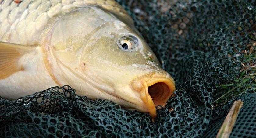 Wiadomości, znęcanie rybami sprzedawca usłyszał wyrok miesięcy pozbawienia wolności - zdjęcie, fotografia