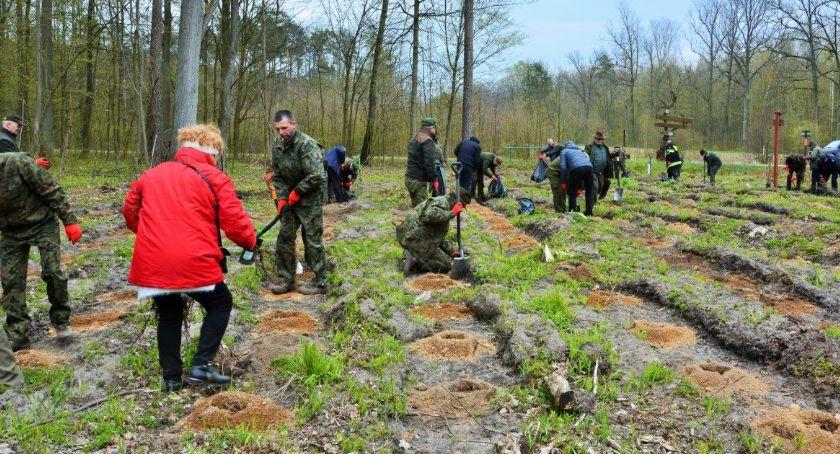 Wiadomości, Posadzonych będzie sadzonek drzew krzewów zdrowie lecie - zdjęcie, fotografia