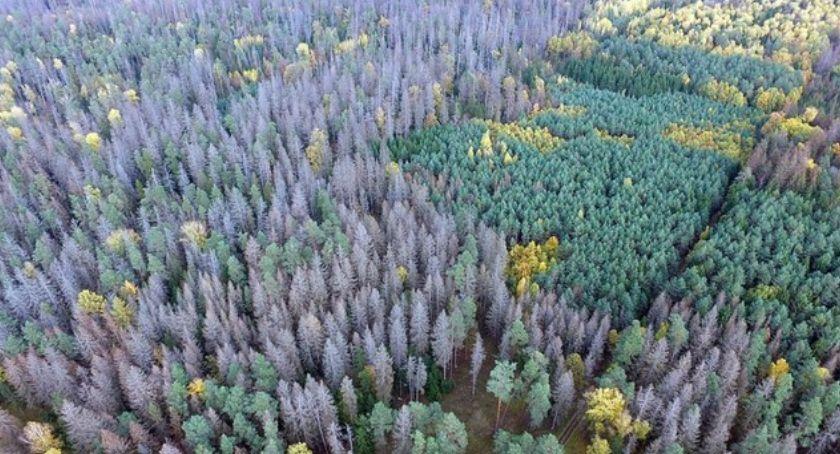 Wiadomości, Organizacja ekologiczna wprowadzała błąd Znów chodzi Puszczę Białowieską - zdjęcie, fotografia