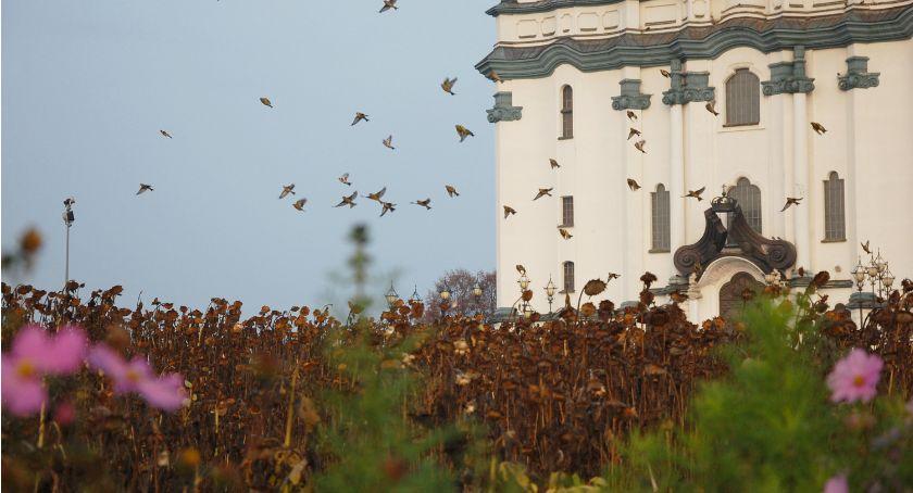 Wiadomości, Słoneczniki łąkach zwiędły łąki nadal pełnią ważną funkcję - zdjęcie, fotografia