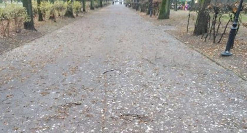 Wiadomości, powiedzieć… mocno gówniany problem Parku Planty - zdjęcie, fotografia