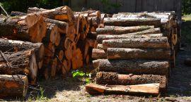 Leśnicy zapewniają opał dla mieszkańców Puszczy Białowieskiej