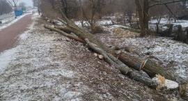 Drewno z Ciołkowskiego nie będzie sprzedane, będzie rozliczone