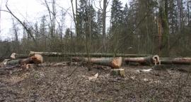 Prawie 200 tysięcy zapłacimy za wycięcie 28 drzew