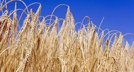 Do lata jeszcze daleko, a eksperci już widzą pierwsze symptomy suszy. Może być źle