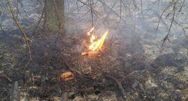 Pożar w lesie. Podpowiadamy jak się zachować