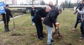 Platforma posadziła 7 drzew, choć pozwoliła na wycięcie tysięcy innych