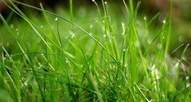 Alergie na pyłki – jak z nimi walczyć?