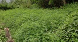 Lecą wióry: Nie tylko trawa żubrowa rośnie w lesie