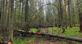 Aktywiści blokują wycinkę drzew. Leśnicy mówią o braku odpowiedzialności