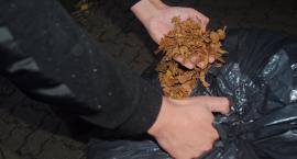Tytoniowa kontrabanda jechała fiatem