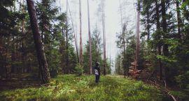 Lecą wióry: Jak radzić sobie z ekologiem w lesie?
