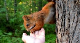Lecą Wióry: Jak policzyć zwierzątka, żeby się im krzywda nie stała