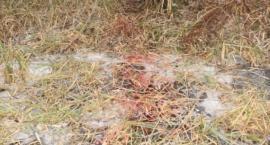 Mundurowi z komendy w Mońkach zatrzymali podejrzanych o kłusownictwo