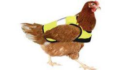 Ubierz swojego kurczaka