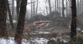 Po latach wycinek tysięcy drzew radna apeluje o nasadzenia