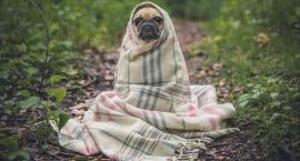 Lecą Wióry: Czy leśnik powinien mieć psa?
