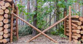 Dyrekcja Lasów wyjaśnia jak odbywa się wywóz drewna