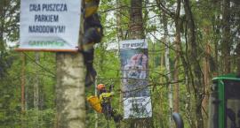 Aktywiści z Puszczy Białowieskiej usłyszą wyrok