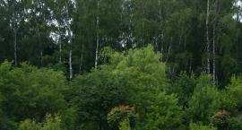 Po lesie najprzyjemniej chodzi się latem