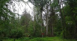 Powiększy się nam rezerwat Puszczy Białowieskiej