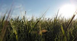 Platforma Obywatelska: Rząd jest bierny wobec suszy