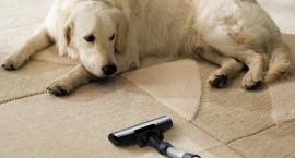 Twój pies nie musi wariować przy włączeniu odkurzacza
