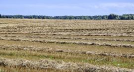 Do wojewody wpłynęły szacunki strat spowodowanych suszą