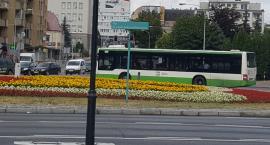 PiS Białystok: To mieszkańcy zdecydują o skomunikowaniu Białegostoku
