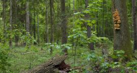 Znów są naciski, żeby cała Puszcza Białowieska była parkiem narodowym