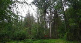 Rezerwat w Puszczy Białowieskiej jest już większy