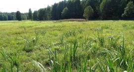 W Puszczy Białowieskiej trwają inwentaryzacje przyrodnicze