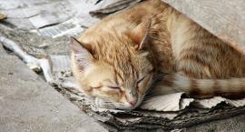 Potrzebny jest informator dotyczący ochrony praw zwierząt