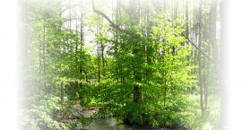 VI Spotkania Ekologiczne